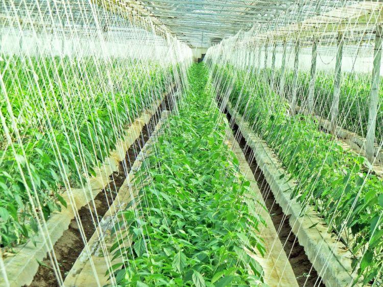 施設園芸農業とは?「儲かる農業」実現のために知っておくべきポイント