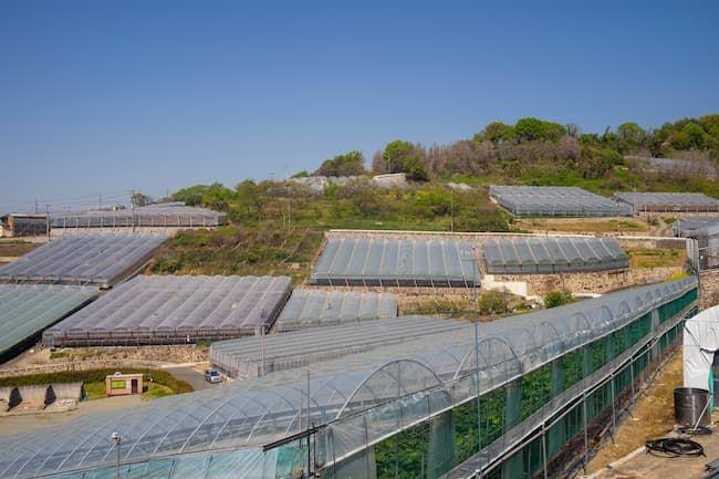 岡山県のぶどうハウス栽培