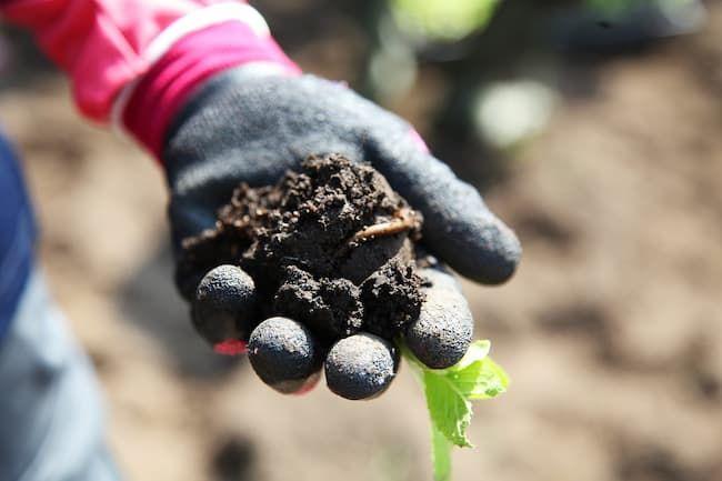 農業女子向け 鮮やかなカラーの背抜き手袋