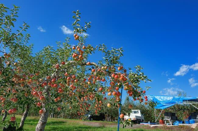果樹もトラックも減価償却資産