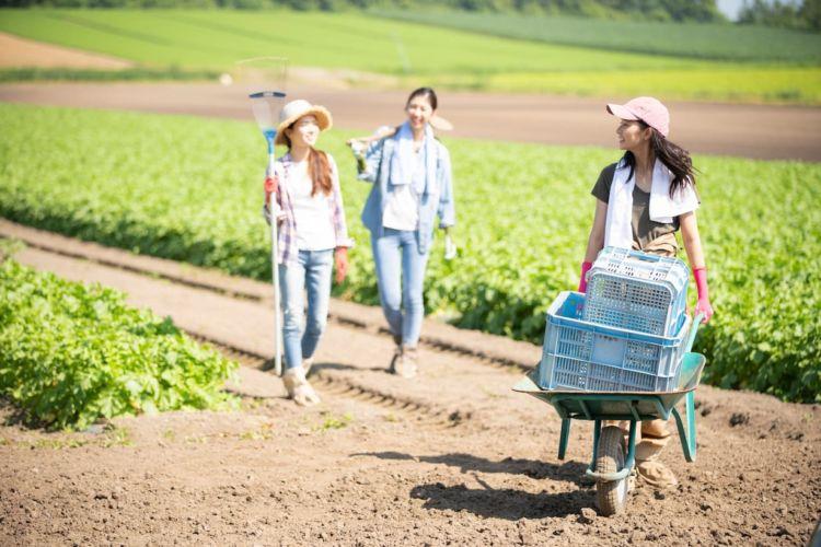 農家がアルバイト募集をする時のポイントは? 求人募集のコツを紹介