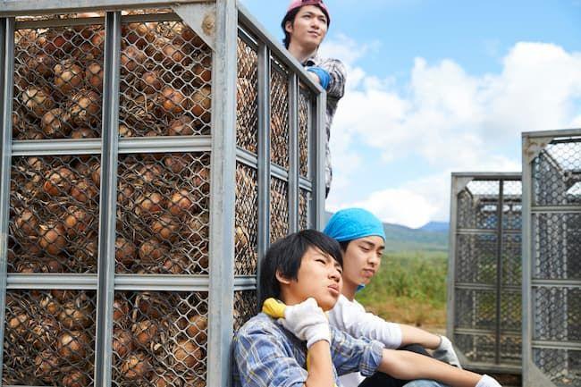 収穫作業中のアルバイト