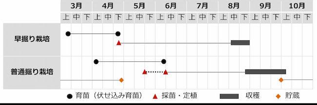 サツマイモ(甘藷)の栽培暦 本州