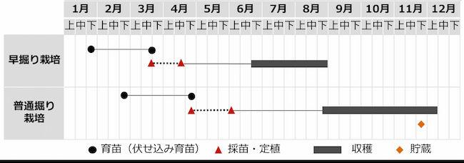 サツマイモ(甘藷)の栽培暦 九州