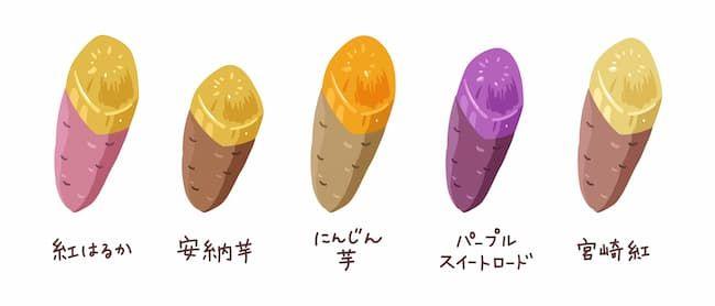 サツマイモ(甘藷)のさまざまな品種
