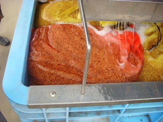 温湯種子処理機による種子消毒