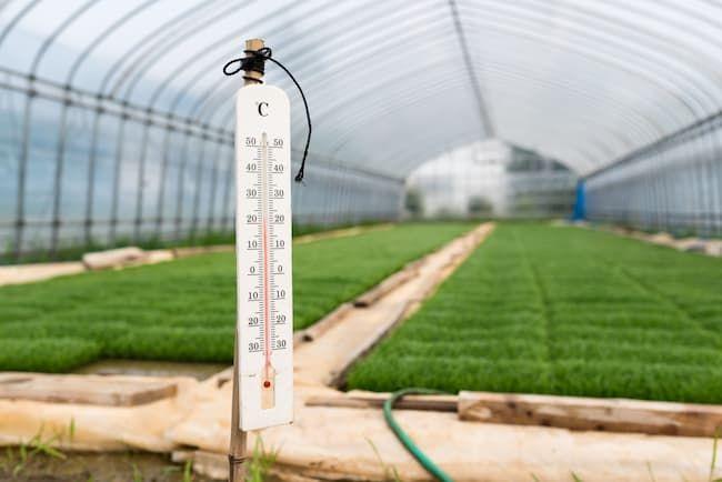 緑化~硬化期の温度管理