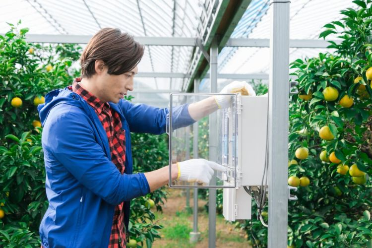 ビニールハウスの温度管理で作物の収量アップをめざそう