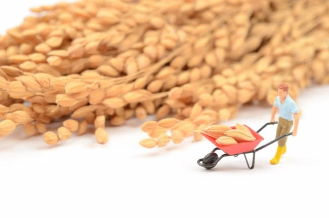 玄米など生産物の未販売分も棚卸資産となる