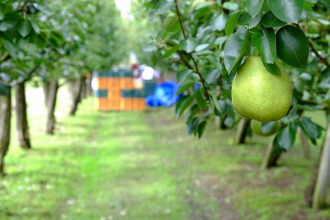 農業簿記では果樹も減価償却の対象