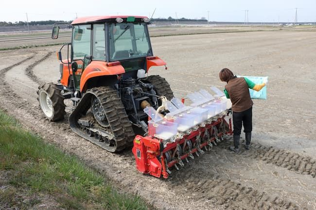 水稲直播栽培での化成肥料投入