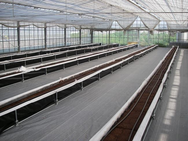 自動灌水装置を設置した作付け前のビニールハウス