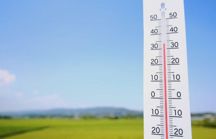 作物の高温障害とは? 発生のメカニズムから症状、予防対策までを学ぶ