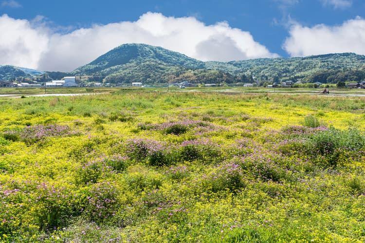 休耕畑の雑草対策!作業負担を軽減しながら地力を維持する除草のコツ