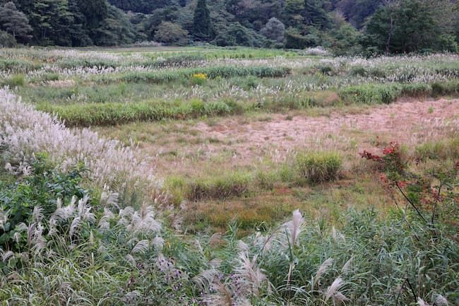 ススキや雑草が繁茂する耕作放棄地