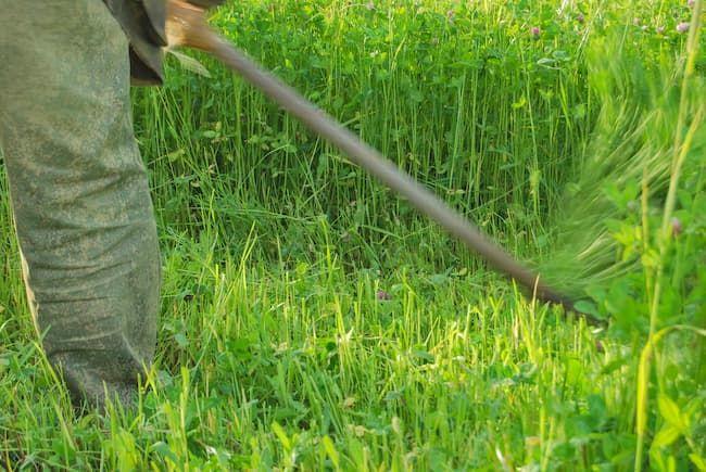 草刈り機による除草