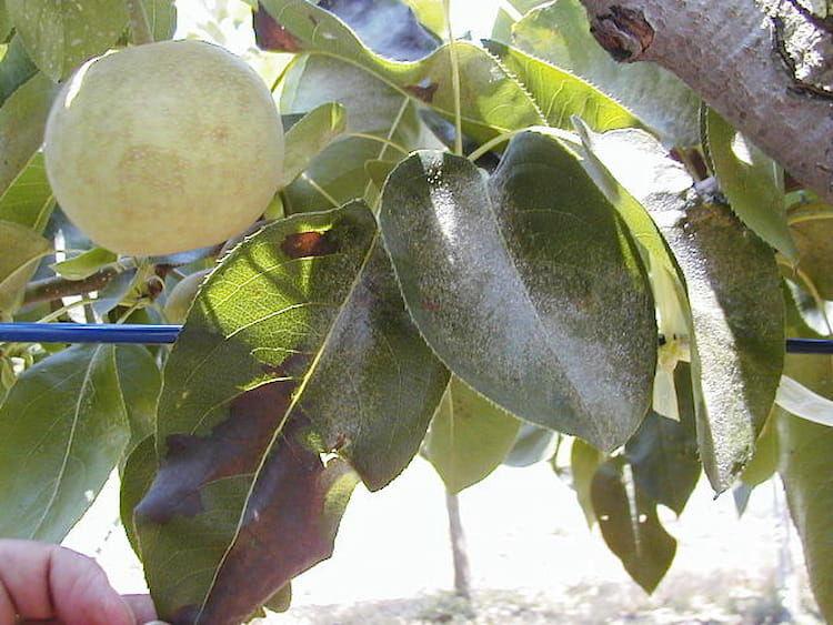 ハダニ類を農薬で徹底防除!効率的な対策とおすすめの農薬一覧