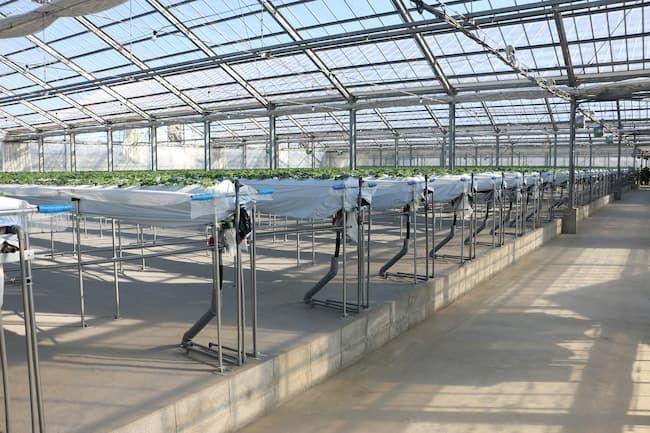 イチゴの養液土耕栽培設備