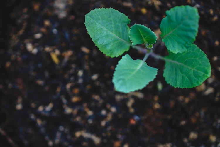 「フルボ酸」による土壌改良で収量アップ!? 期待できる効果とは