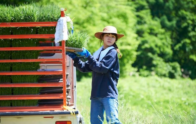 水稲の育苗箱を運ぶ農業女子