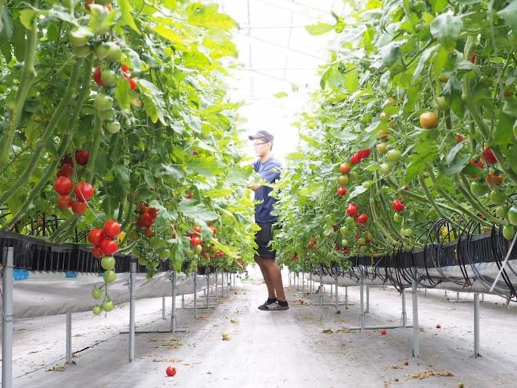 生きた栽培データを活用して本当に儲かる農業のシステムを作る|前編|必ず完売させるマーケットイン農業
