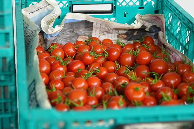 株式会社Happy Quality 生産委託農家から出荷されたトマト