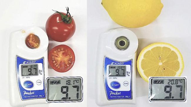 一般的な糖度計で糖度を計測すると、おいしいトマトの糖度とレモンの糖度が同じ数値を示すことがある