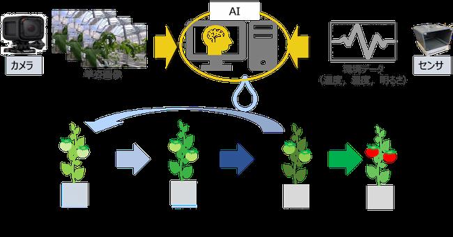 「しおれ検知AI」を用いて、最適な水分ストレスを与えることができる