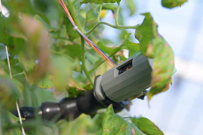 株式会社Happy Quality トマトの草姿を撮影するカメラ