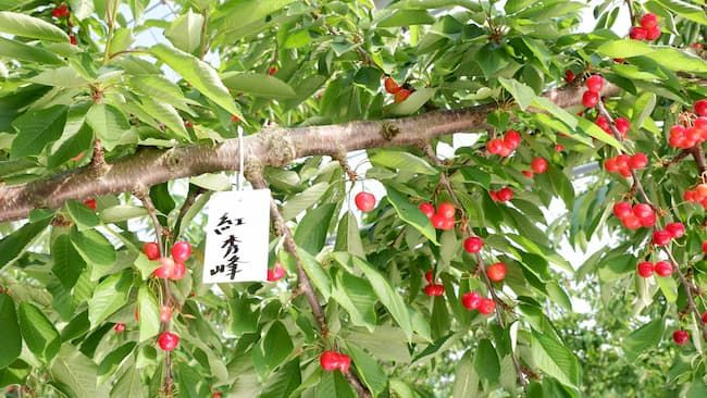 紅秀峰の園地