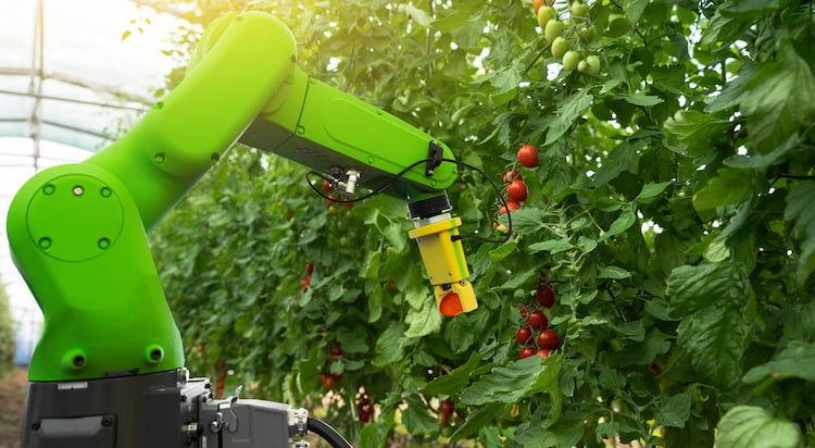 トマト収穫ロボット開発の今~「スマート農業」がもたらす未来とは~