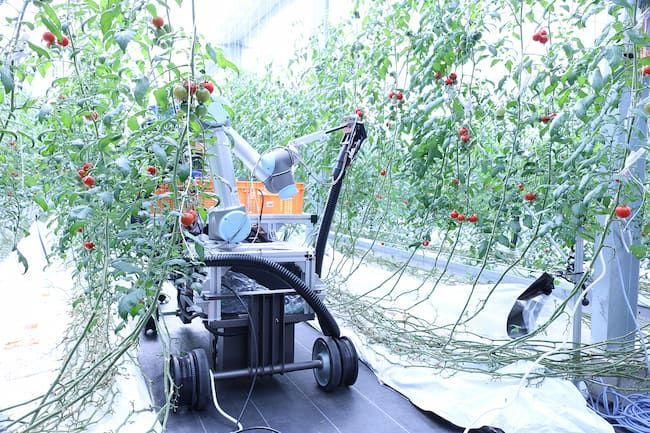 株式会社スマートロボティクスの「トマト自動収穫ロボット」