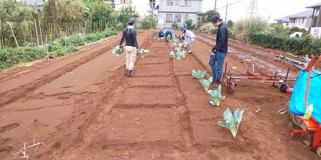 苅部農園 農業塾生による秋冬野菜の播種・定植作業風景