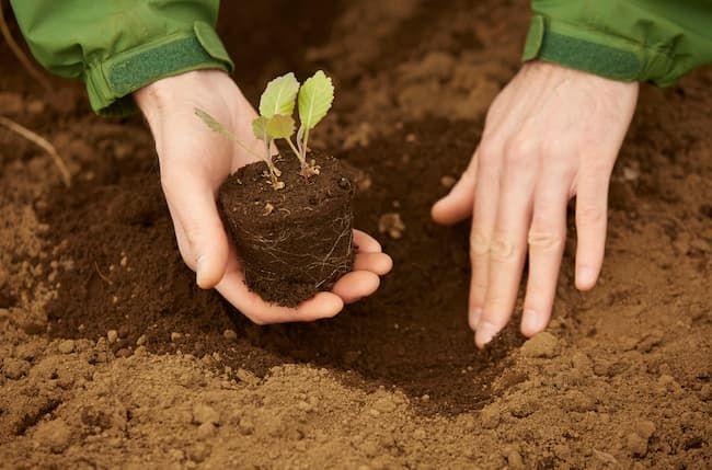 農福連携 工夫次第で様々な農作業を任せられる
