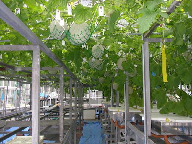 まちだシルク農園の水耕栽培