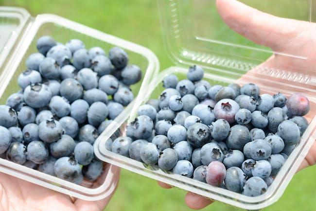ブルーベリー観光農園では顧客が収穫・梱包する