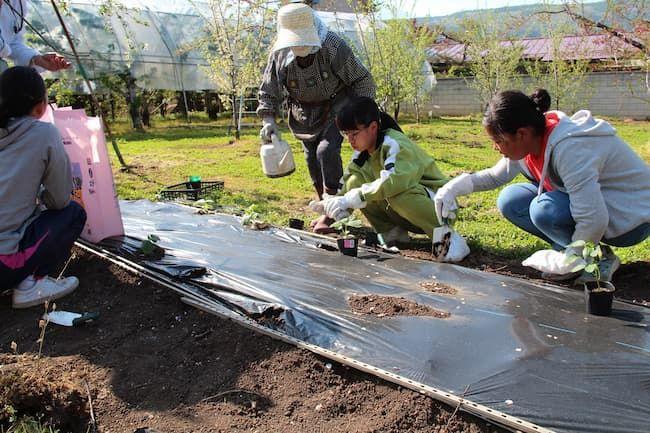 長野県飯綱町農家民泊での野菜作り体験