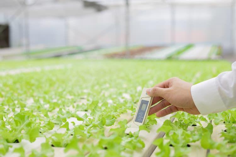 飽差とは?  ハウス栽培に欠かせない指標を知り、収量アップを実現!