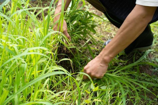 草取りは単純作業だが重要