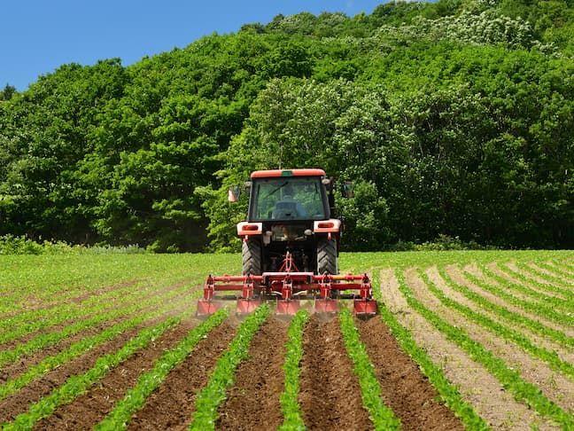 乗用管理機による小豆の中耕