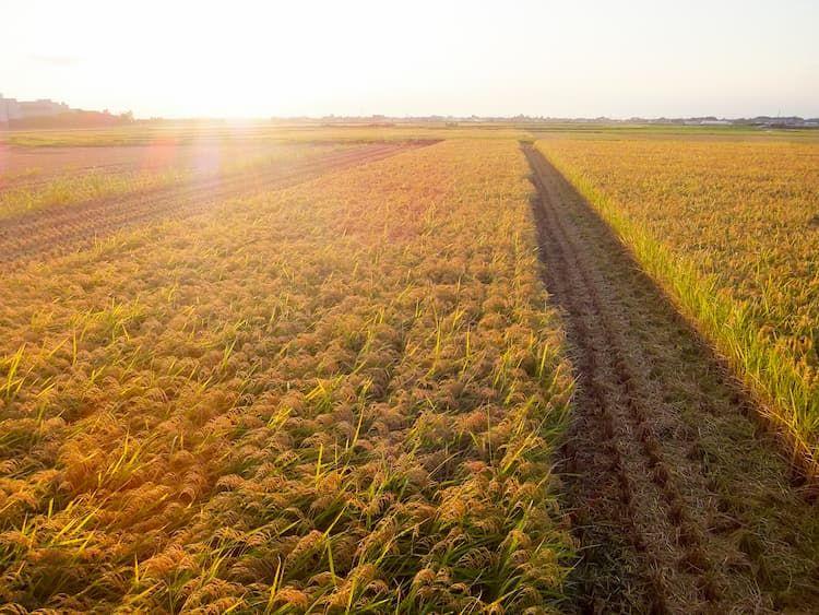 農業におけるメガファームの定義とは? 農家が大規模化するメリットとデメリット