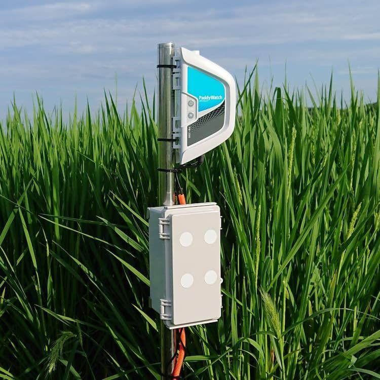 水稲の水管理を省力化する「パディウォッチ」とは? 導入メリットや価格を紹介!