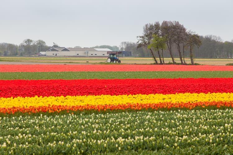 オランダ農業はなぜ強い?生産性を上げる最新技術と経営戦略の特徴