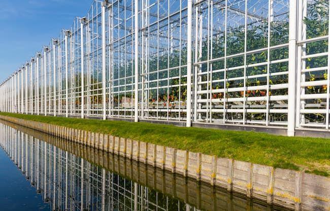 オランダ・マースダイクの大規模トマト栽培施設