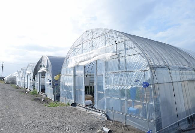 小松菜の栽培ハウス