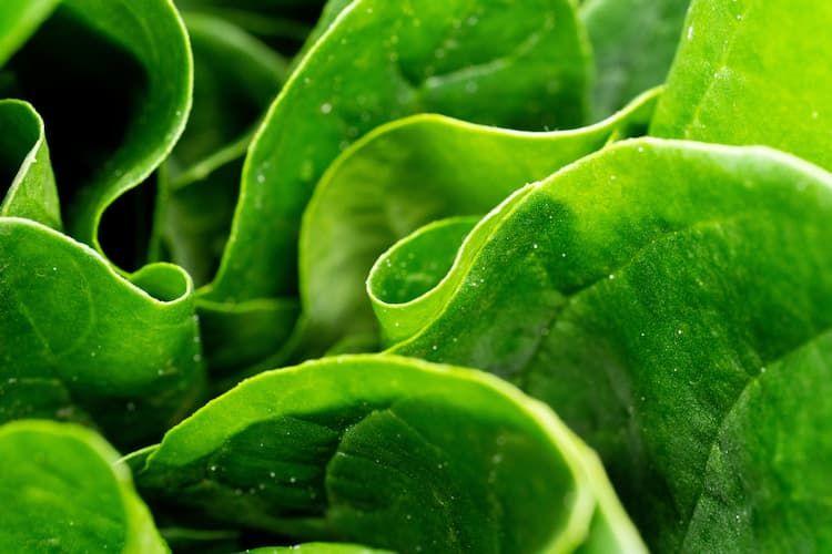 硝酸態窒素とは?窒素肥料が野菜類にもたらす効果と、知っておきたい注意点