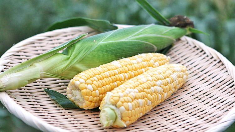 この地でしか穫れない「甘いとうもろこし」の魅力を全国に広め知名度アップ|遠州森鈴木農園の販売戦略