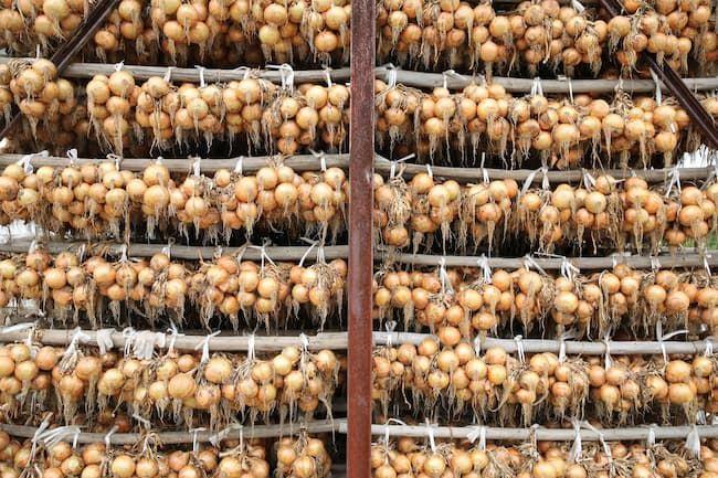 淡路島の伝統的な玉ねぎ貯蔵庫「吊り小屋」