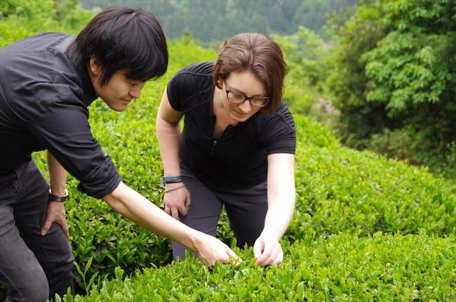 D-matchaのハイキングツアー。スタッフより、茶摘みの方法を案内
