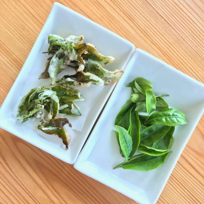 D-matchaのハイキングツアー。摘み取った茶葉の天ぷらを味わえる。